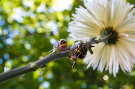 Pflanzen Die Schnecken Vertreiben by Pflanzen Die Schnecken Vertreiben Schneckenschreck Diese