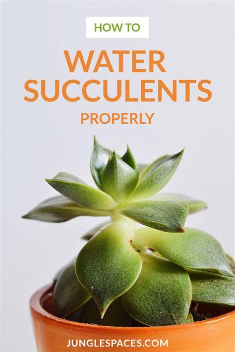 how to water succulents how to water succulent plants jungle spaces