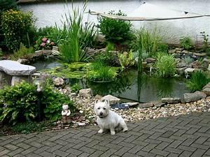 Hund Im Garten Vergraben : hund am teich ~ Lizthompson.info Haus und Dekorationen