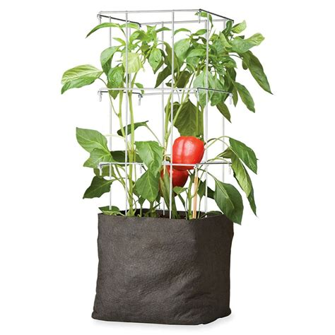 best tomato grow bags top 28 grow bags for tomatoes tomato growing in containers and grow bags tomato growing