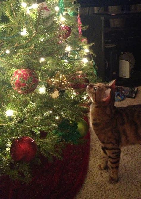 Cat Christmas Tree Meme - site unavailable