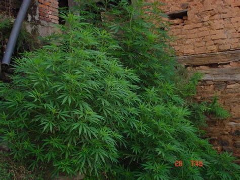 plante verte chambre plante verte photo