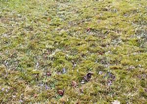 Wann Blühen Krokusse : die krokuswiesen im erzgebirge am 14 maerz 2012 die ersten krokuse kommen ans licht ~ Eleganceandgraceweddings.com Haus und Dekorationen