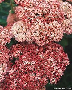 Fall Perennials Martha Stewart