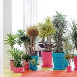 Zimmerpflanzen Fur Dunkle Ecken Mein Schoner Garten