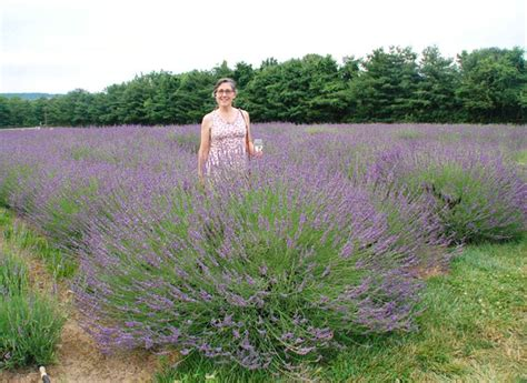 does lavender grow in florida 128 best images about plants for texas on pinterest sun hummingbirds and barbados