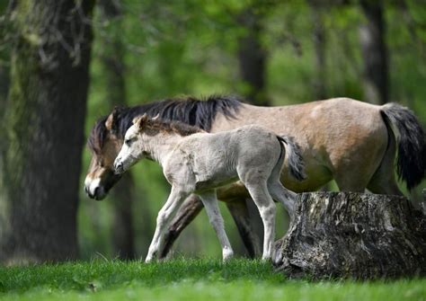 horses illness cope shelter breed native death must left