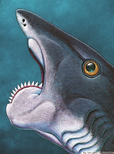 shark prehistoric helicoprion saw spiral teeth chainsaw extinct fish fossil mouth ancient jaw toothed fossils its dinosaur tooth blade animal