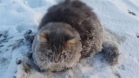 winter  russland katze friert  boden fest und wird