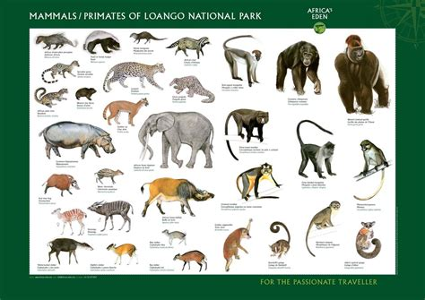 Wild Animals Pictures with Names for Kids Wild animals