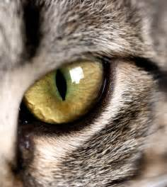 cats eye quotes about cats quotesgram