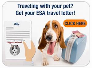 emotional support animals With emotional support animal letter san francisco