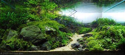 d 233 tails de l aquascaping aquariophilie debutant et