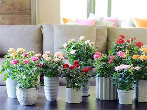Como Plantar Rosas En Tu Jardín Cómo Instalar Rosales