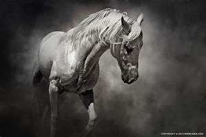 Black and White Horse by Dimitar Hristov (54ka) | 54ka ...