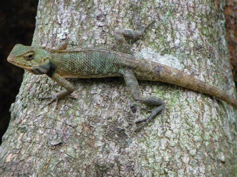 Changable Lizard