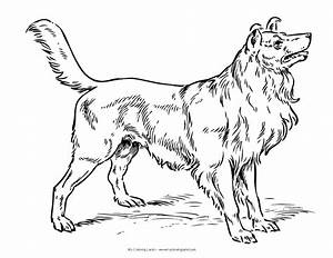 Realistic Dog Coloring Pages 13935, - Bestofcoloring.com