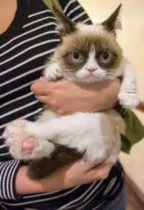 grumpy cat pictures photos grumpy cat visits new york city