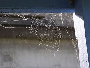 Spider Web In The Corner Free Stock Photo - Public Domain ...