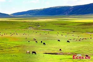 Picturesque grasslands in Altay, NW China's Xinjiang (1/6 ...