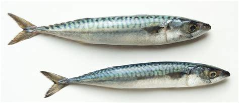 poissons cuisine les poissons cuisine à l 39 ouest