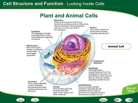 Plant Cell Structure And Function Chart