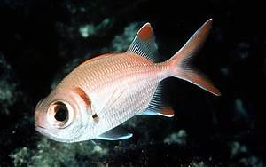 Fish List In Comoros