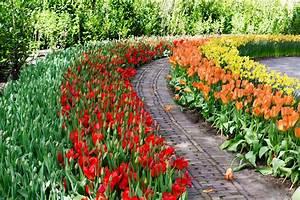 Planter Des Bulbes : des endroits extra pour planter vos bulbes de tulipes ~ Dallasstarsshop.com Idées de Décoration