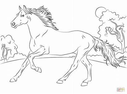 Ausmalbilder Horse Coloring Running Arabian Printable Sheet