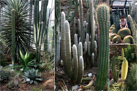 Botanischer Garten Berlin Fotos by Botanischer Garten Berlin Dahlem Foto Bild