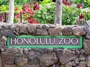 Honolulu Zoo Photograph by Mary Deal