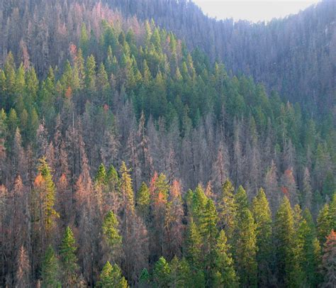 Ensuring Healthy Forests For Future Generations  Crag Law