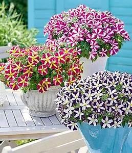 Petunien Samen Kaufen : h ngepflanzen online kaufen bestellen bei baldur garten ~ Michelbontemps.com Haus und Dekorationen