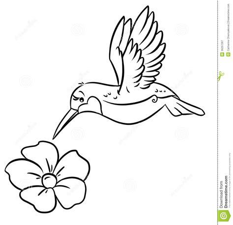 Hummingbird And Flower Coloring Pages Royalty Free Stock