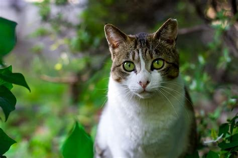5 Ways to Keep Cats Cool in Summer
