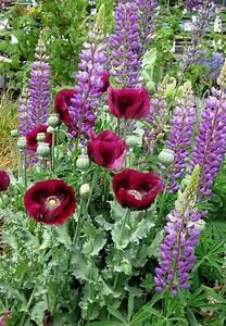 Schöne Gärten Anlegen : pin von cornelia k ppner auf garten pinterest g rten blumen und pflanzen ~ Markanthonyermac.com Haus und Dekorationen