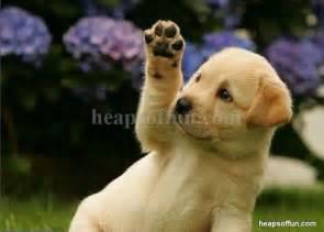 Funny Dog Saying Hello