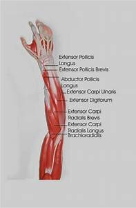Forearm Stretches