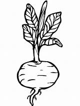 Coloring Beet Pages Beets Vegetables Template Print Templates sketch template
