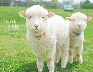 MAKIBA: Cute Farm Animals / PIE International