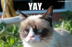 Yay Cat Meme Funny