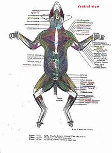 Pnb Communique  Cat Muscles Lab Info   Quiz 3 Guide