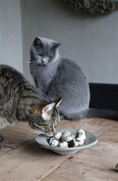 images  cat houses  pinterest cats