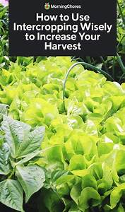 How To Use Intercropping Wisely To Increase Your Harvest