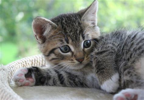 Katzen Halten Ausstattung by Katzen Ausstattung Und Kosten Auf Noows De
