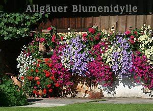 Blumenkästen Bepflanzen Ideen : blumenk sten balkonk sten bepflanzen balkonpflanzen terrassenbepflanzung zimmerpflanzen ~ Eleganceandgraceweddings.com Haus und Dekorationen