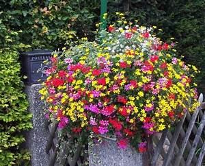 Geranien Gelbe Blätter : g rtnerei h bner ergebniss ~ Orissabook.com Haus und Dekorationen