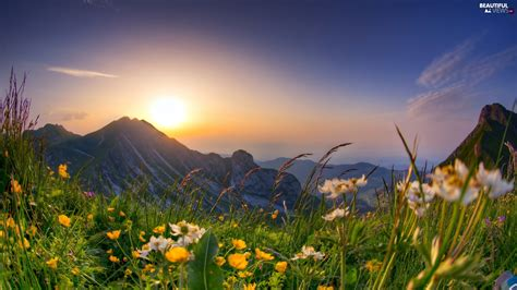sunrise spring meadow flowers mountains beautiful