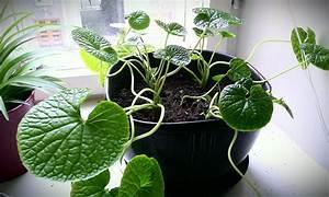 Feng Shui Garten Pflanzen : zimmerpflanzen umtopfen gr ne pflanzen richtig umgetopft ~ Bigdaddyawards.com Haus und Dekorationen
