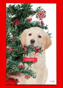 golden retriever christmas card Archives - Kelly Richardson